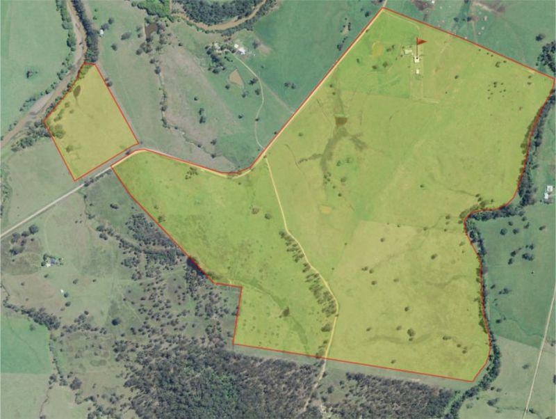 Cattle Grazing Acres Port Macquarie Region
