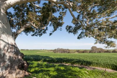 Versatile Lifestyle / Commercial Farm - 671.25 ha (1,658 acres)