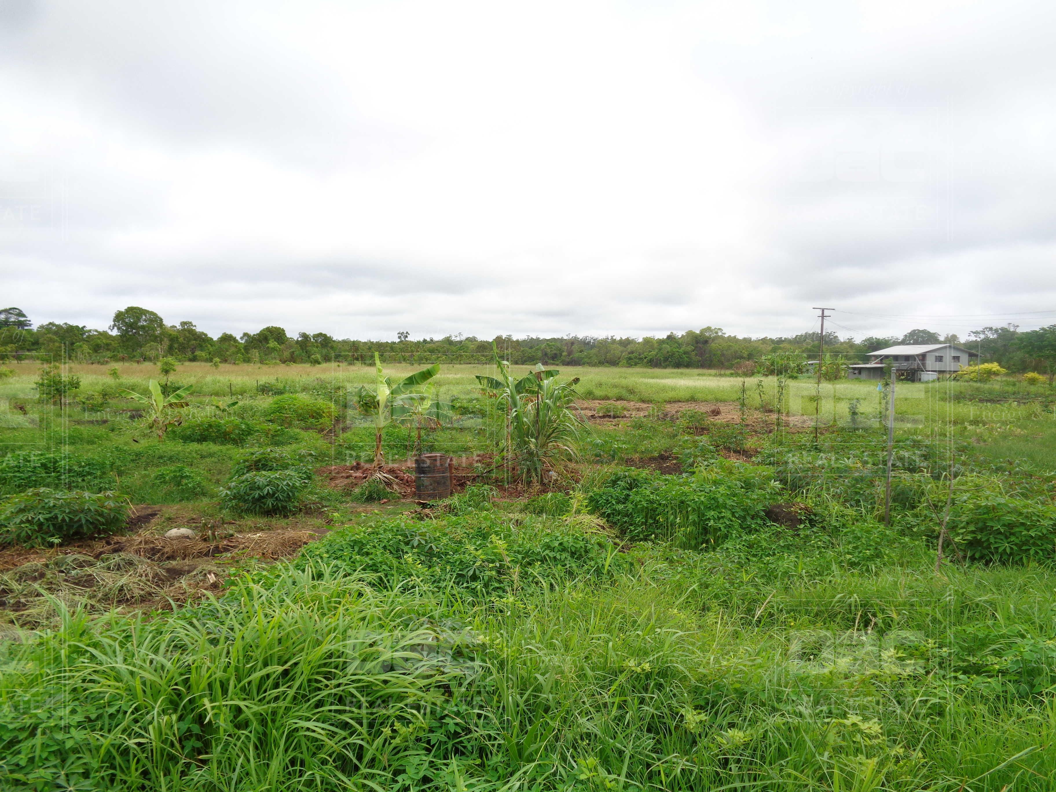 WP365: Daru Farmland for Sale