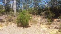 5 Acre Bush Block