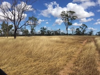 100 ACRES  -  LOWSET HOME  -  SHEDS  -  BORES