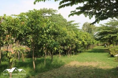 Puk Ruessei, Kandal | Land for sale in Khsach Kandal Puk Ruessei img 6