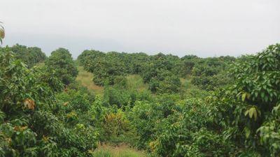 Baek Chan, Kandal   Land for sale in Angk Snuol Baek Chan img 5