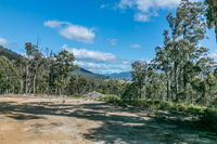 Approx. 50 acres, Lovely Private Bush Setting