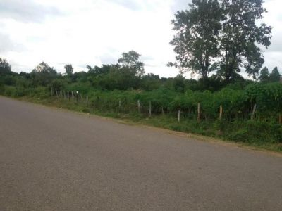 | Land for sale in Pailin  img 4