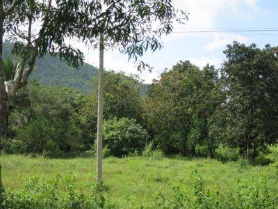 Srae Ambel, Koh Kong   Land for sale in Srae Ambel Srae Ambel img 1