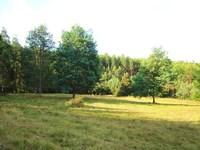 Pasture, Bush and Rivulet Boundary