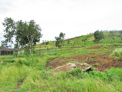 S6726 - Huge vacant land for sale - AO