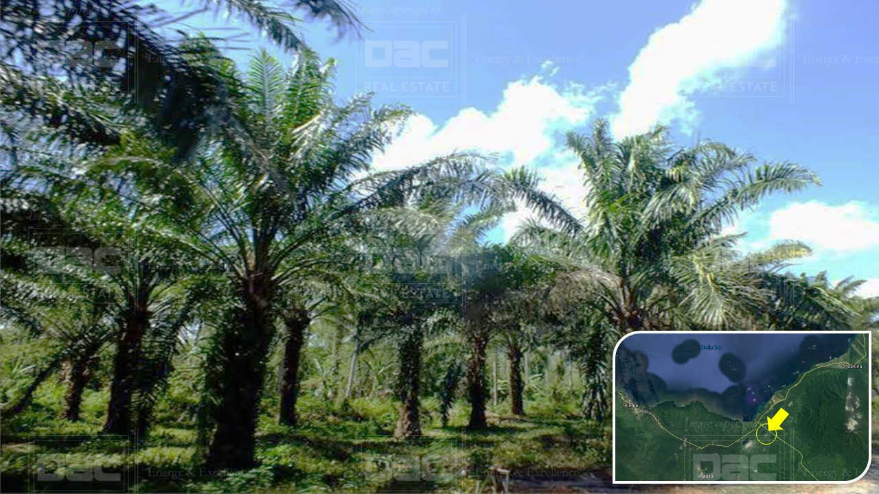 VLKM409: Oil Palm Plantation for Sale