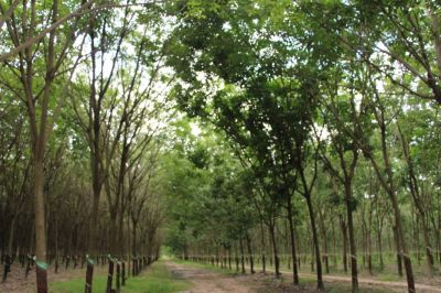Dambae district, Tbong Khmum province, Dambae, Tboung Khmum | Land for sale in Dambae Dambae img 0