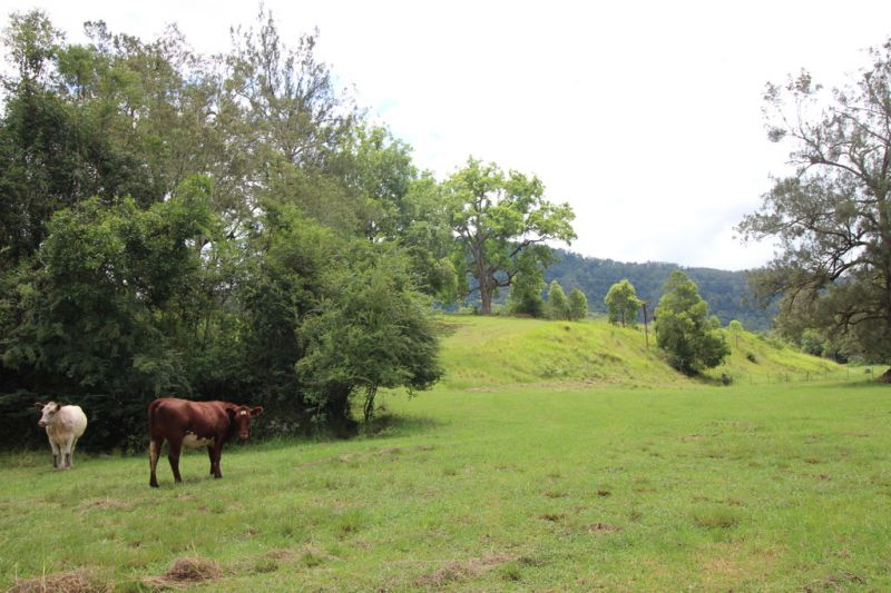 Country Lifestyle Grazing Farm on Kindee Creek near Wauchope and Port Macquarie