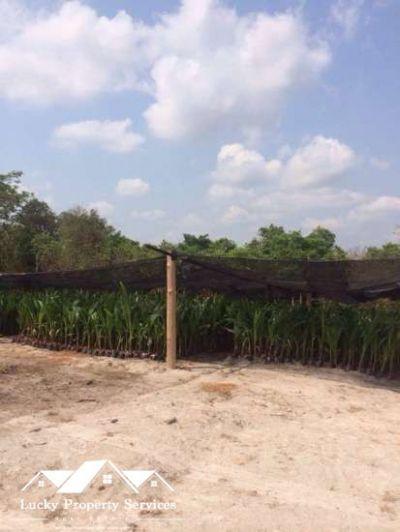 Kampong Seila, Sihanoukville | Land for sale in Kampong Seila Kampong Seila img 2