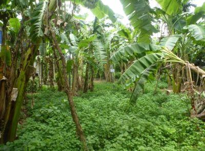Samraong Knong, Battambang | Land for sale in Aek Phnum Samraong Knong img 0