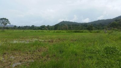 Ream, Sihanoukville | Land for sale in Prey Nob Ream img 4