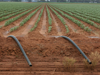 Well located cotton farm with abundant water