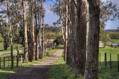 Blue Gums Farm - Lifestyle and Beef Fattening Property