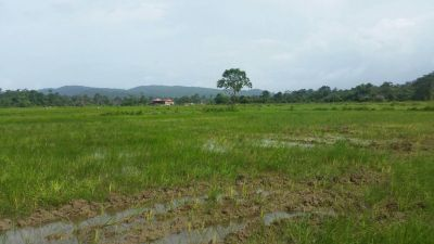 Ream, Sihanoukville | Land for sale in Prey Nob Ream img 6
