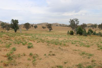 VACANT LAND ON 36.05 ACRES (APPROX)