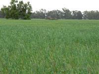 Highly productive mixed farming enterprise