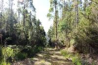 Serene Bushland Setting