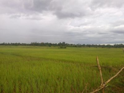 Veal Pong | Land for sale in Odongk Veal Pong img 2
