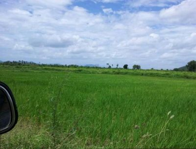 Krang Ampil | Land for sale in Samraong Tong Krang Ampil img 2