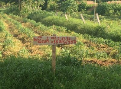 Sampov Lun, Battambang |  for sale in Sampov Lun Sampov Lun img 1