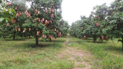 Baek Chan, Kandal   Land for sale in Angk Snuol Baek Chan img 4