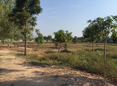 Tuek Vil, Siem Reap |  for sale in Puok Tuek Vil img 3