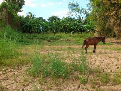 Preaek Anhchanh | Land for sale in Mukh Kampul Preaek Anhchanh img 3