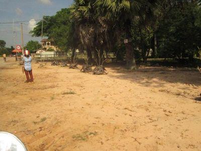 Svay Dangkum, Siem Reap | Land for sale in Angkor Chum Svay Dangkum img 2