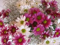 Florist - Revesby District