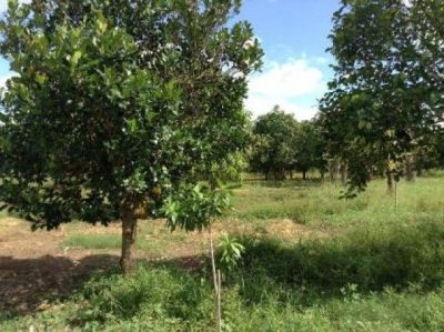 | Land for sale in Chbar Mon  img 1