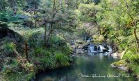 Rural High Country Land on Cells River Yarrowitch between Walcha & Wingham near Port Macquarie