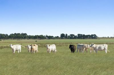 Productive Grazing or Cropping Property
