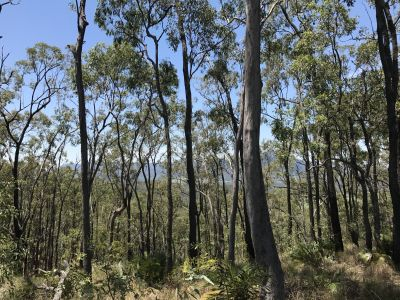 MOUNT PERRY, QLD 4671