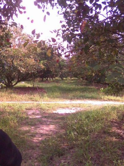   Land for sale in Srae Ambel  img 4
