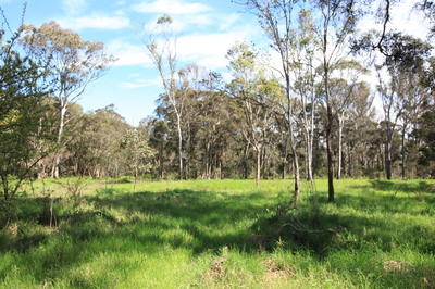 5 acres of vacant land