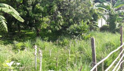 Nirouth, Phnom Penh | Land for sale in Chbar Ampov Nirouth img 0