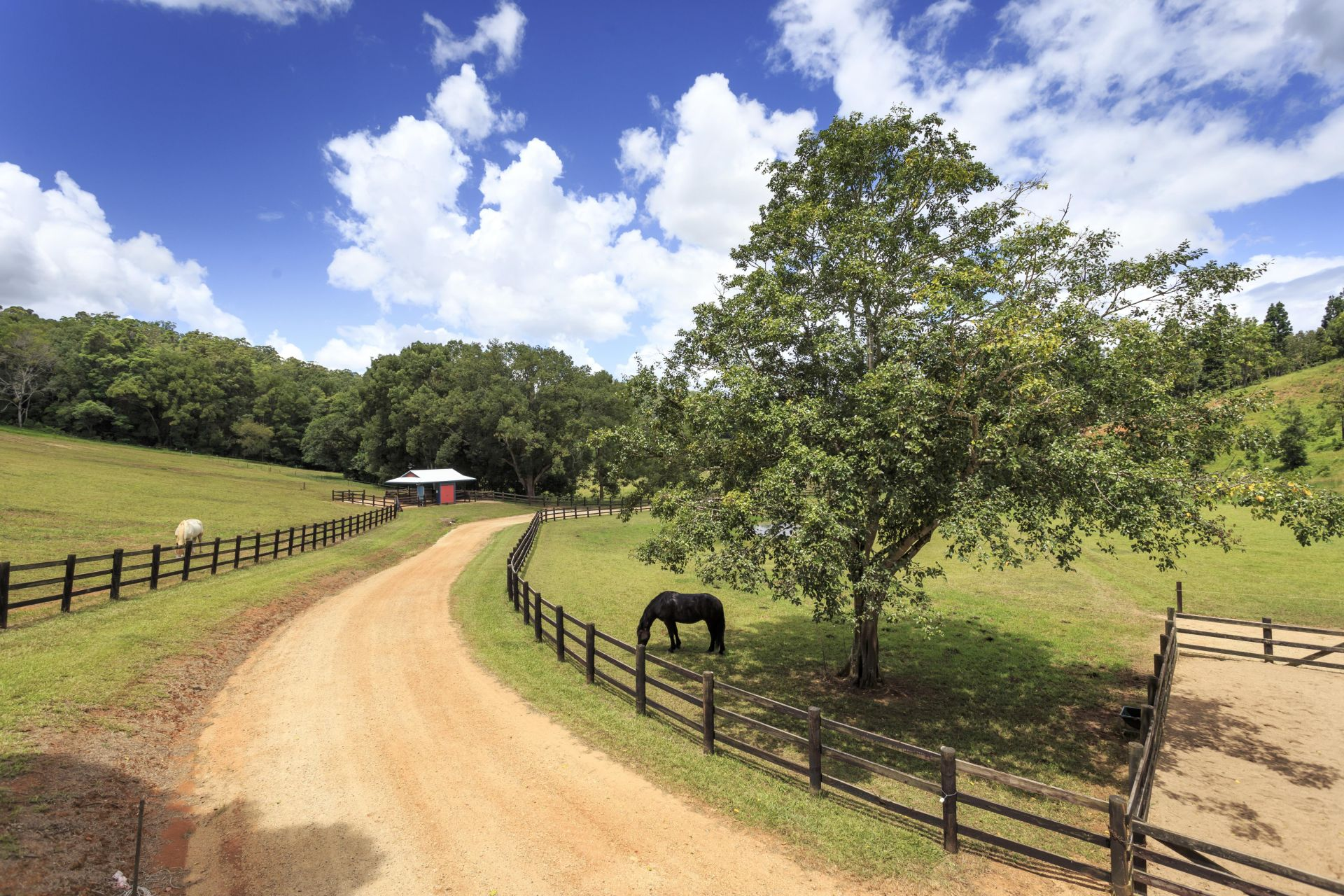 Additional photo for property listing at Rosehill Estate - A hinterland paradise  Nobbys Creek, New South Wales,2484 Αυστραλια