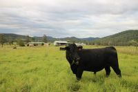 River Front Country Farm Acreage with 5 Bedroom Home at Ellenborough Near Wauchope & Port Macquarie