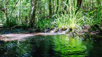 Land for sale in Far North Queensland SPEEWAH