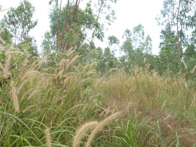 Sangkat Buon, Sihanoukville | Land for sale in Sihanoukville Sangkat Buon img 0