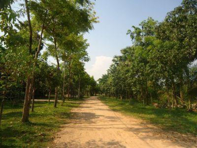Svay Dankum, Siem Reap | Land for sale in Siem Reap Svay Dankum img 2