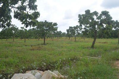 S'ang Phnum, Kandal | Land for sale in S'ang S'ang Phnum img 1