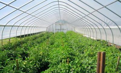 Freehold Fruit Farm Est. 20 Years! - Ref: 15124