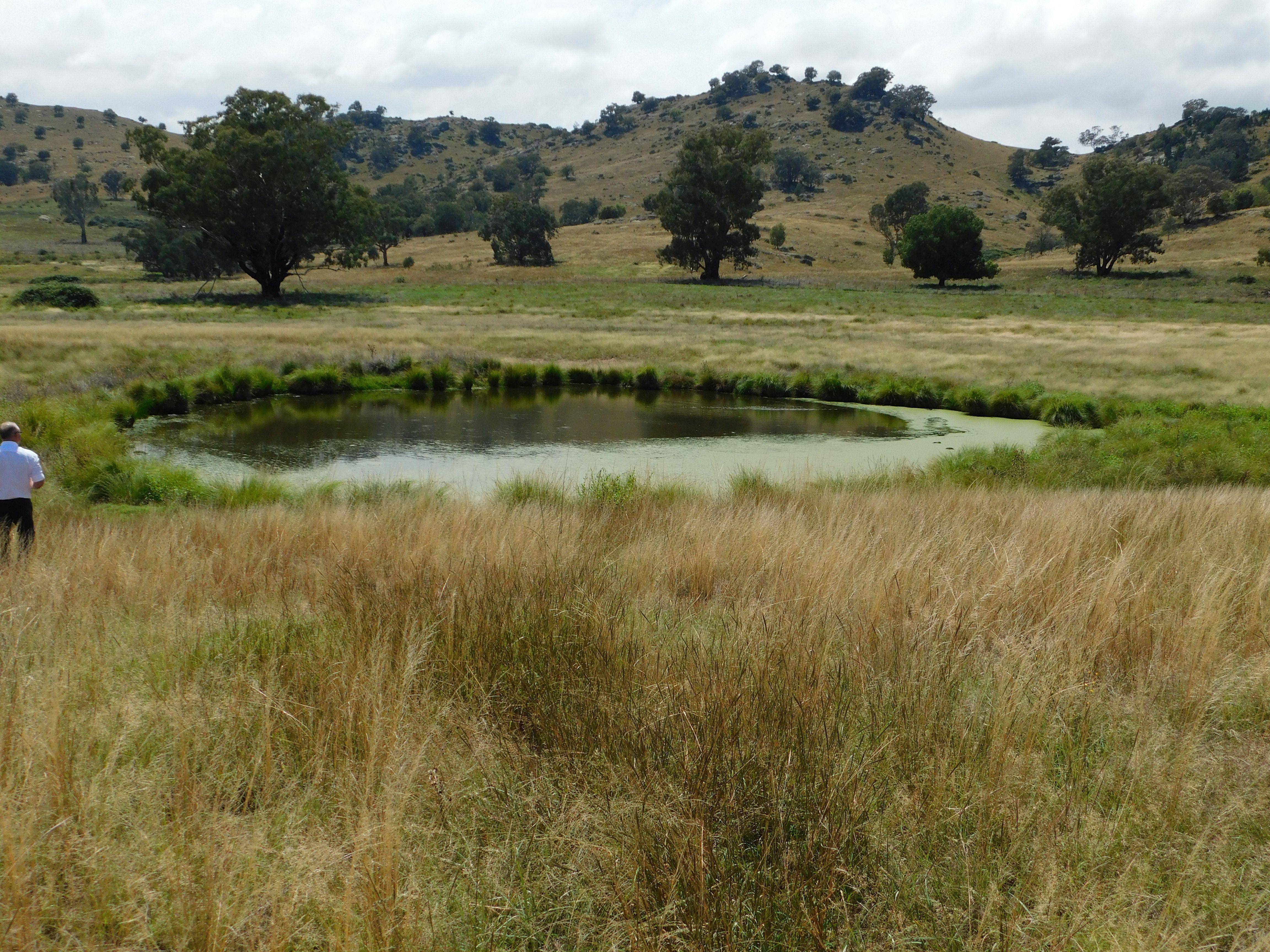 3284 frogmore, Hovells Creek