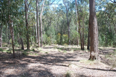 Lot 415 Millingandi Ridge Road, Millingandi