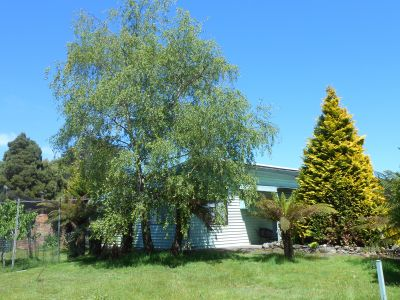 3 bedroom house on 3/4 acre with sheds and 3 phase power
