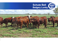 Western NSW Beef Production with Scale & Security